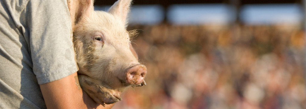 Man holding pig